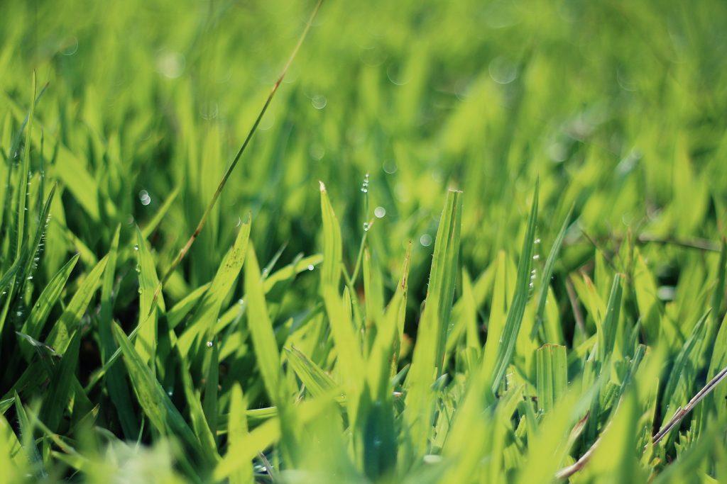 Lower Hutt Lawn Mowing